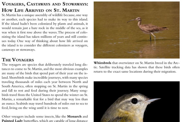 voyagers-castaways-stowaways-1