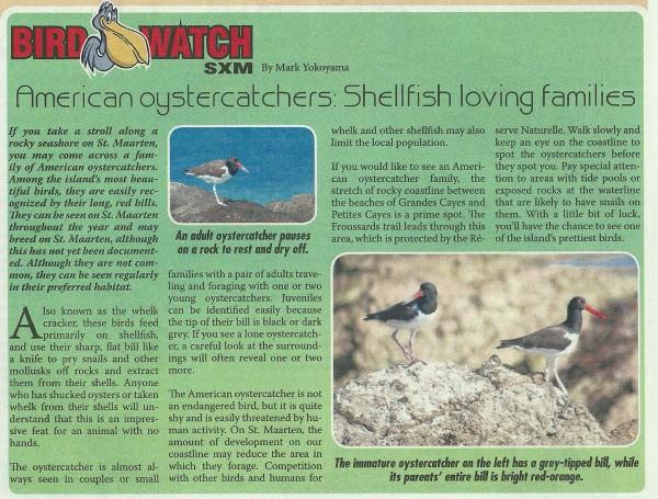 Bird-Watch-Oystercatcher-10-26-13-web
